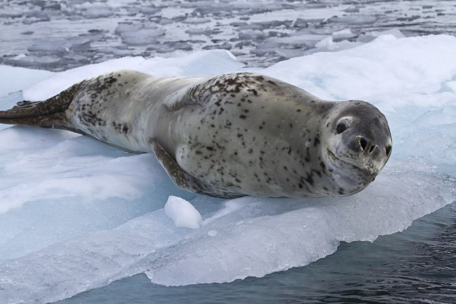 Vavilov: Falkland Islands, South Georgia and Antarctica for Christmas/New Years