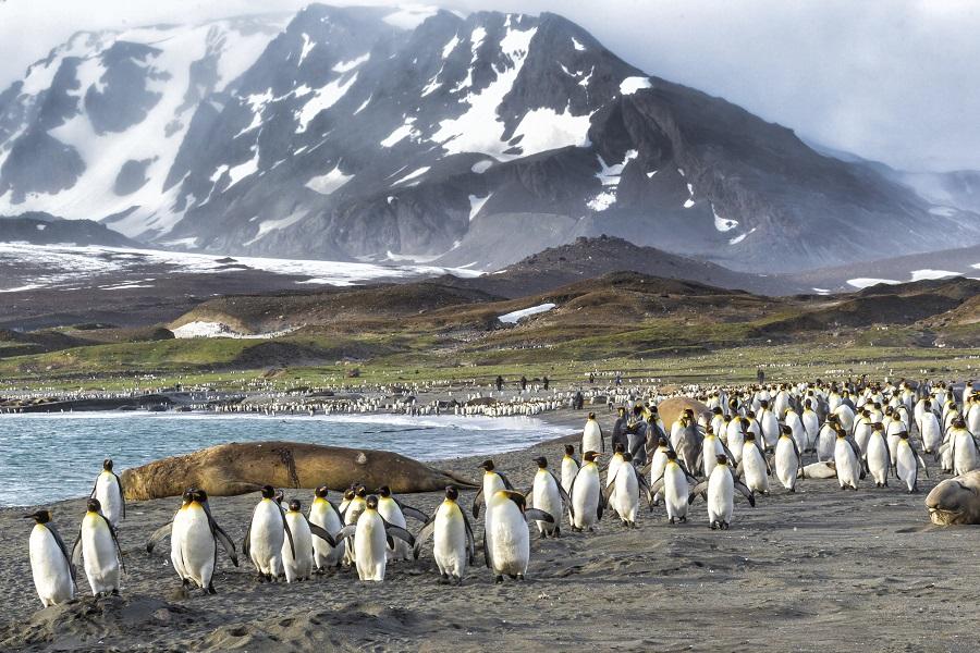 M/S Hebridean Sky: Falklands, South Georgia & Antarctica ex. Puerto Madryn