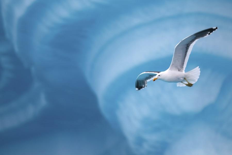 M/S Island Sky: Antarctic Peninsula Express
