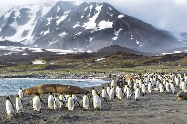 National Geographic Explorer: Antarctica, South Georgia and the Falklands ex. Buenos Aires
