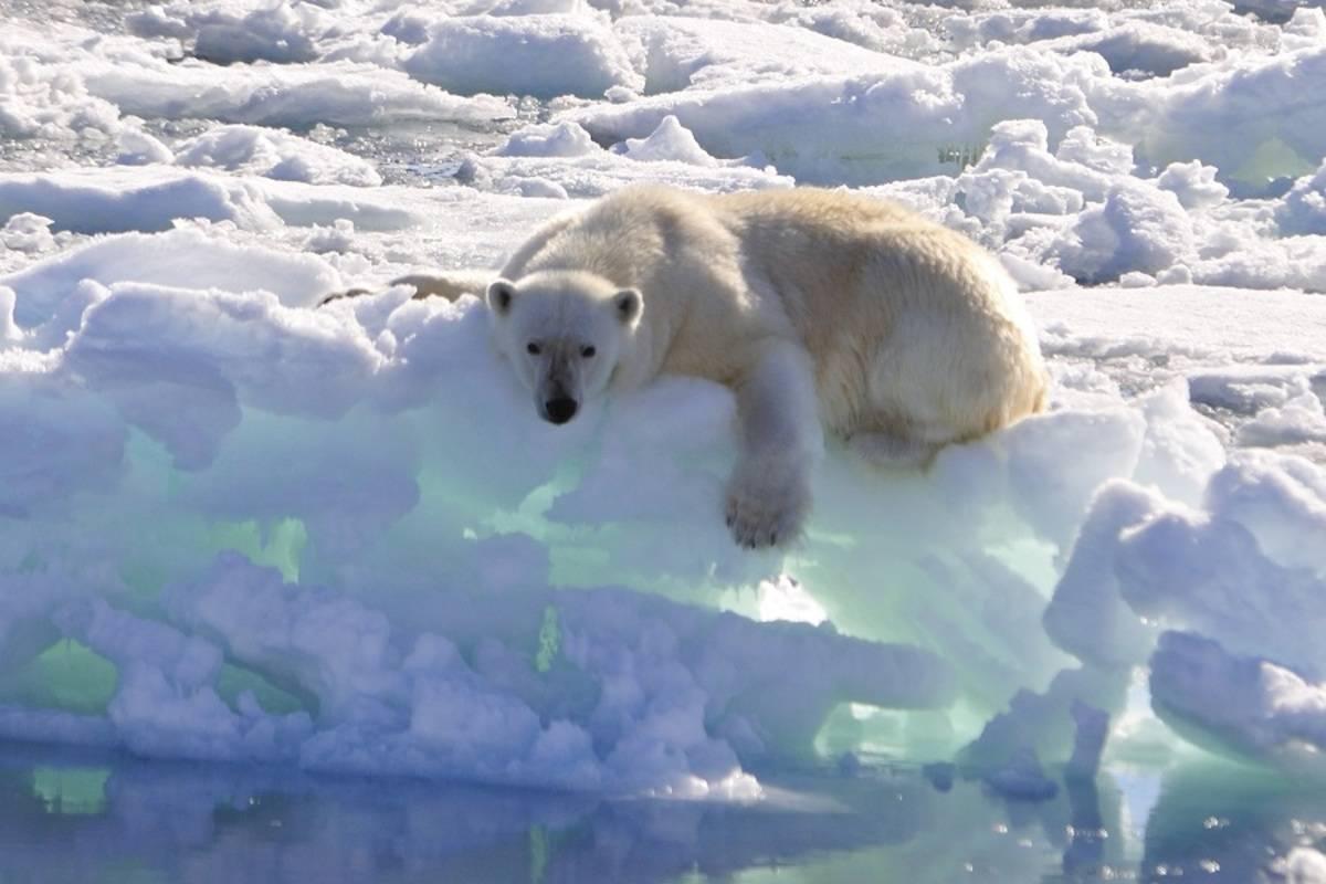 West Spitsbergen & Polar Ice Edge