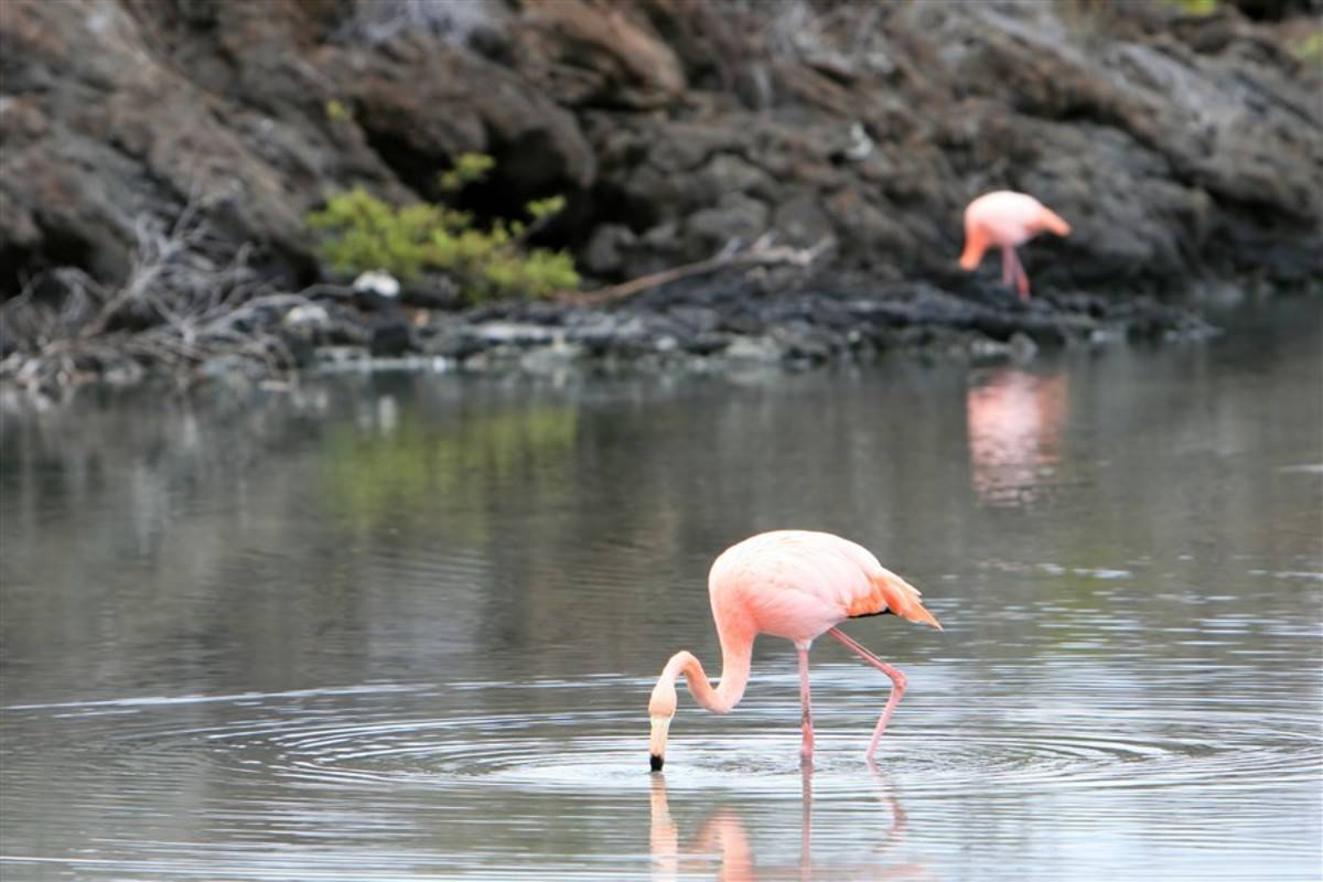 Southern & Central Galapagos Islands