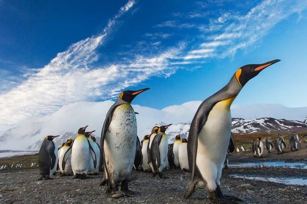 World Explorer: South Georgia & Antarctic Peninsula - Penguin Safari