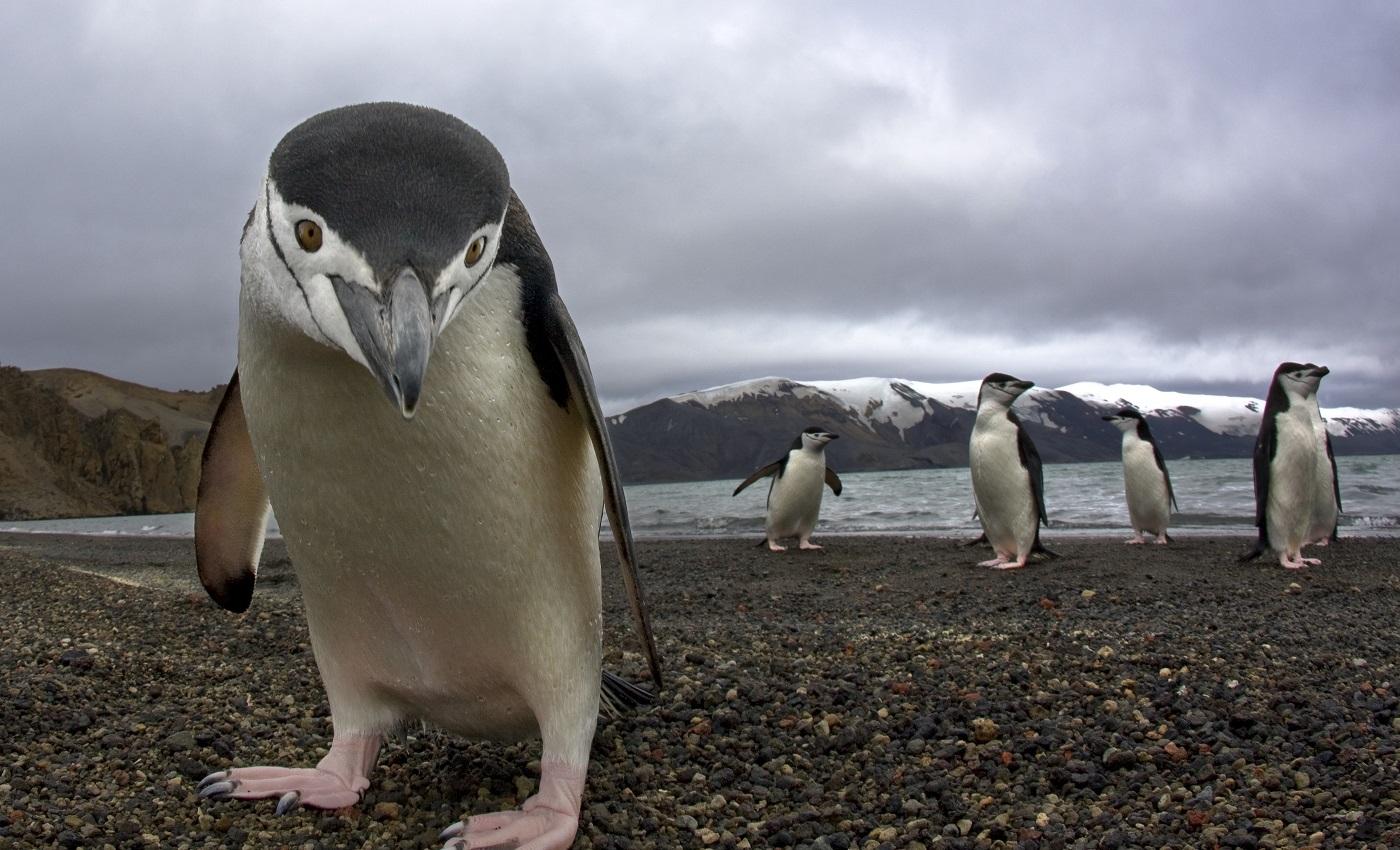 Смешные картинки пингвинчиков, надписями