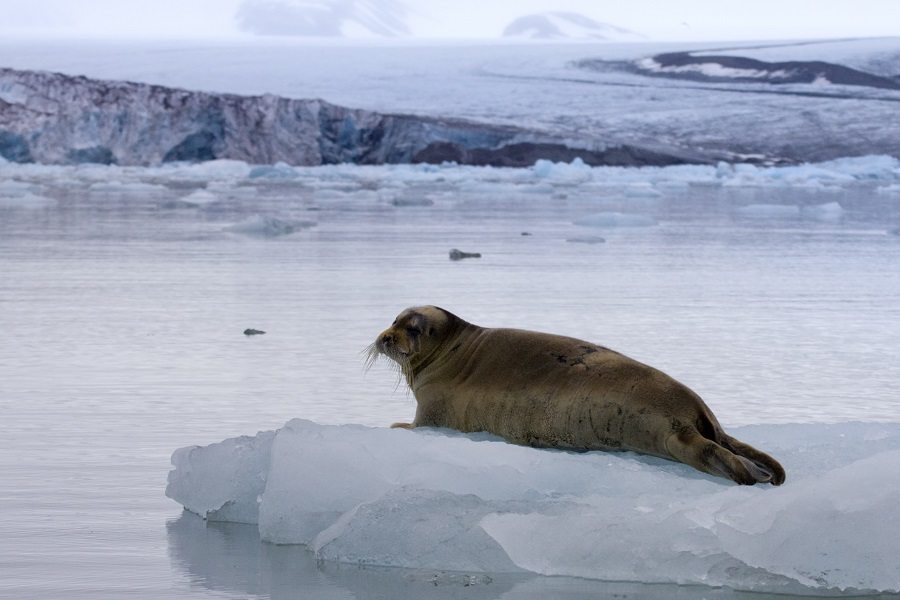 National Geographic Explorer: Svalbard, Iceland & Greenland's East Coast