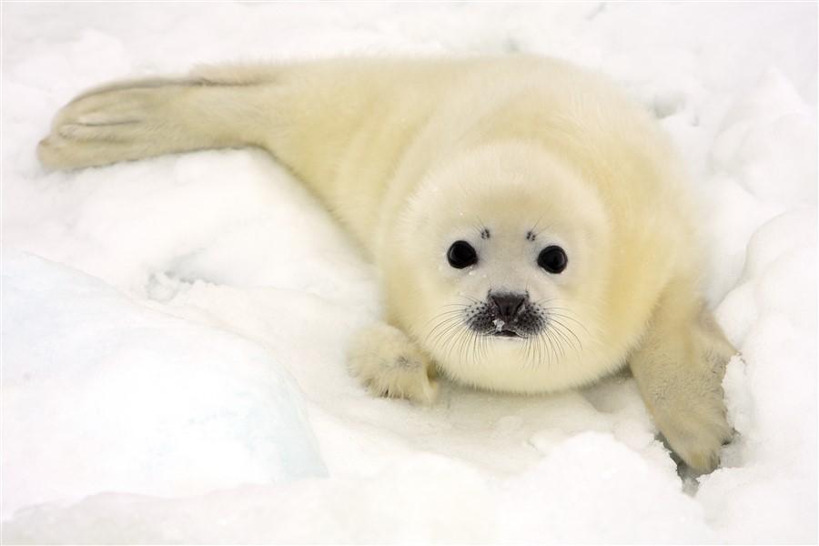 Ocean Adventurer – Introduction to Spitsbergen: Fjords, Glaciers & Wildlife of Svalbard