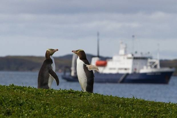 Spirit of Enderby: Subantarctic Islands - Forgotten Islands of the South Pacific