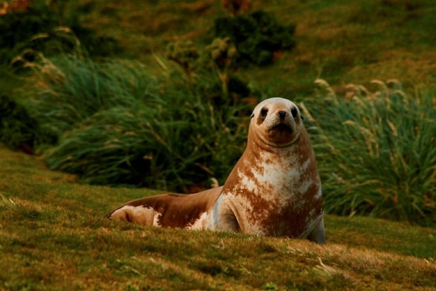 Spirit of Enderby: Sub-Antarctic Islands - Birding Down Under