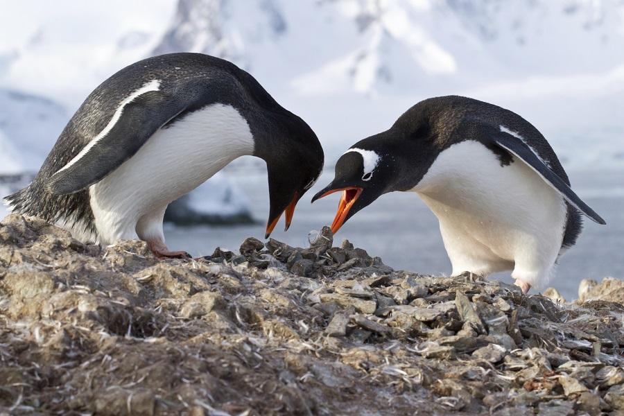 Spirit of Enderby: In the Wake of Scott and Shackleton end Invercargill