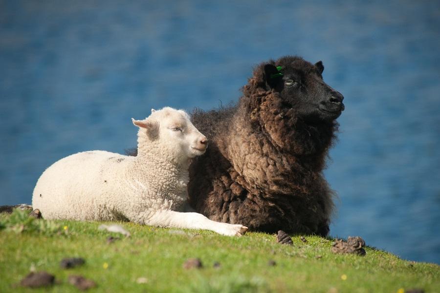 M/V Hondius: Fair Isle, Jan Mayen & Spitsbergen Whale Safari ex. Aberdeen