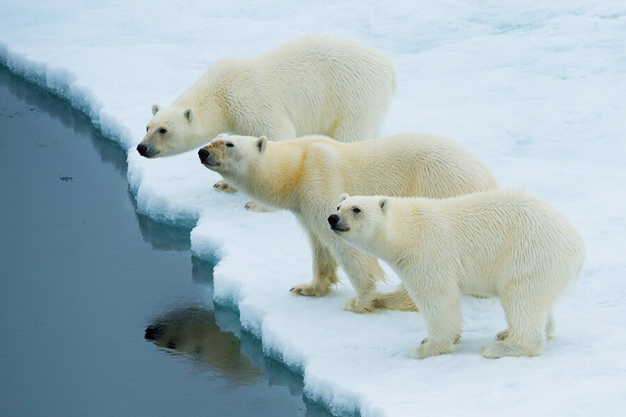 M/V Hondius: North Spitsbergen - Polar Bear & Pack Ice Special