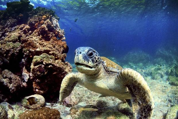 M/Y Aqua: Diving at Wolf and Darwin Islands