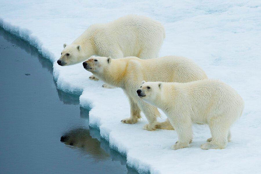M/V Ocean Adventurer: Wild Norway & Svalbard - Far North Arctic