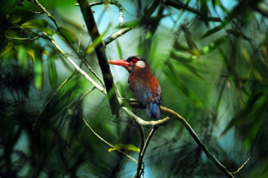 Aria Amazon: Explorer Cruise - Low Water Season