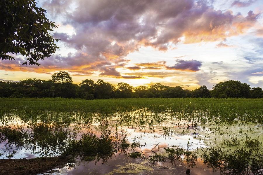 The Peralta: Northern Pantanal Cruise