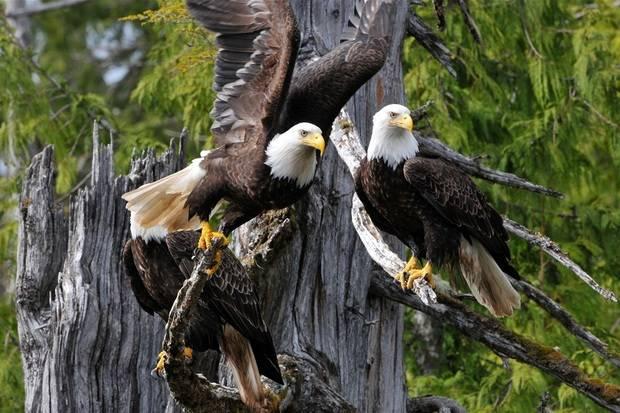 Le Soleal: Wildlife & Forests of Alaska