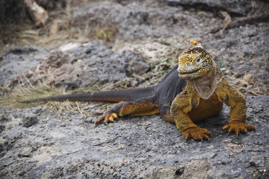 Samba: Southern & Eastern Galapagos Islands