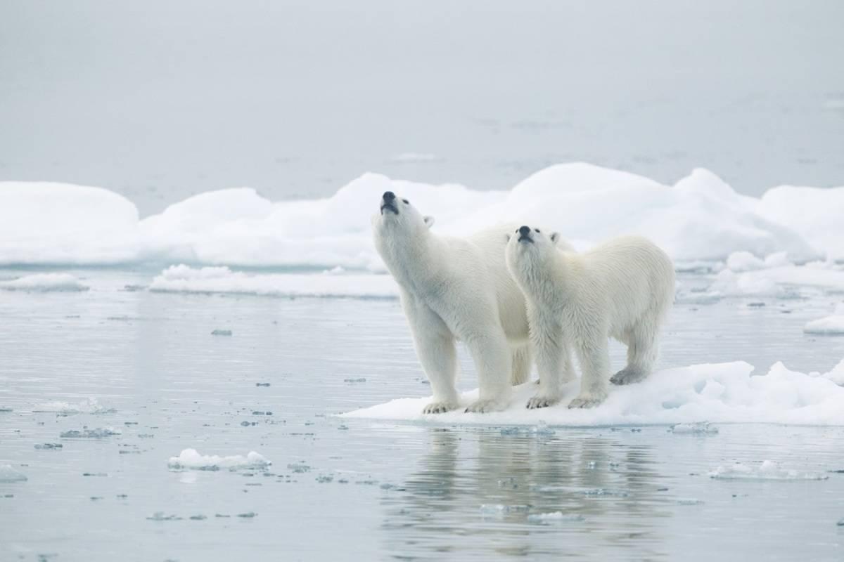 M/V Hondius: Around Spitsbergen - In the Realm of Polar Bear & Ice