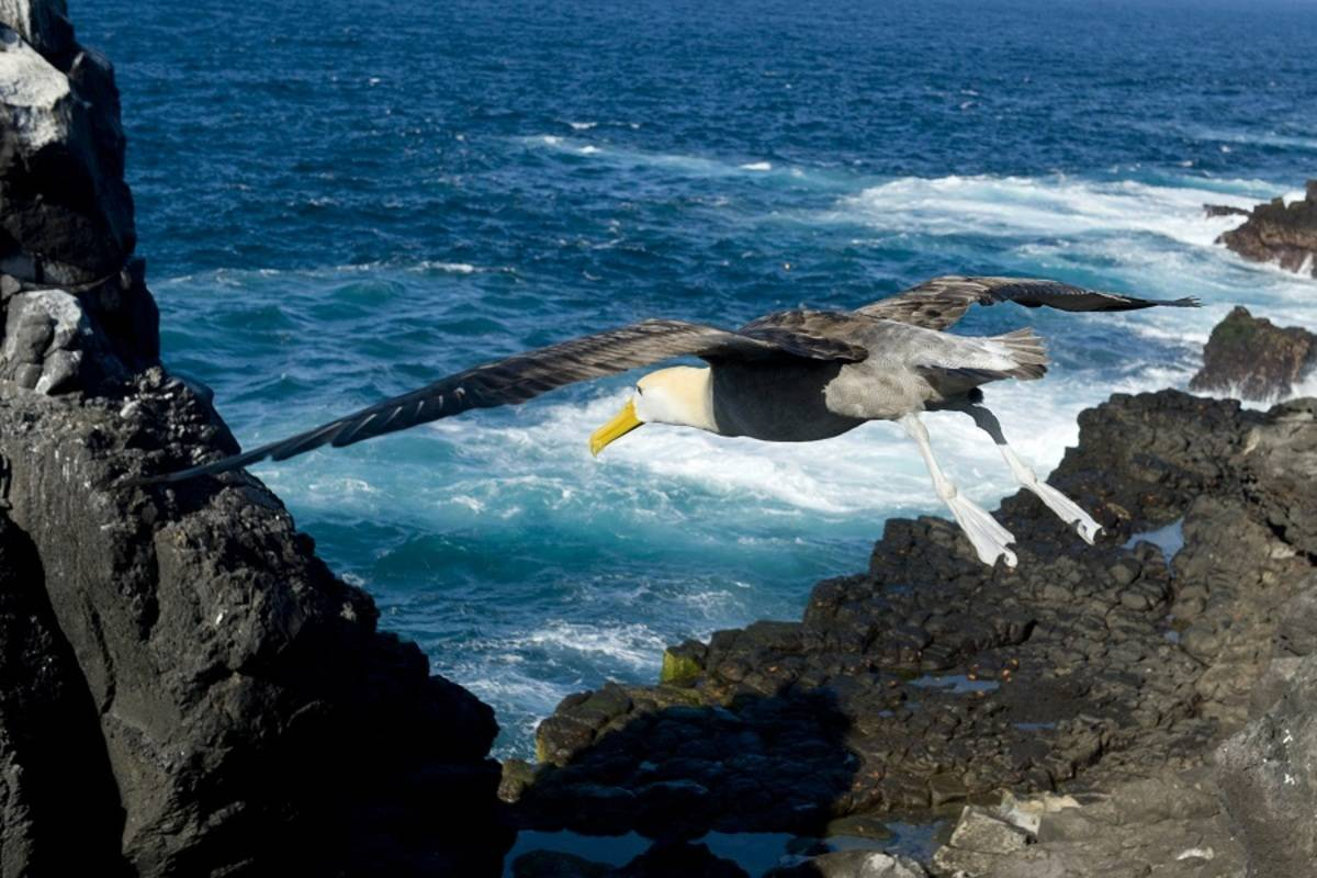 Galapagos Aboard National Geographic Islander