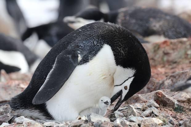 M/S Hebridean Sky: Antarctica Revealed