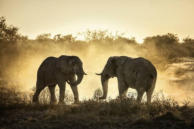 Namibia Highlights: Superior