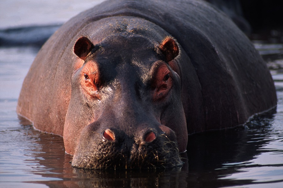 Sable Safari