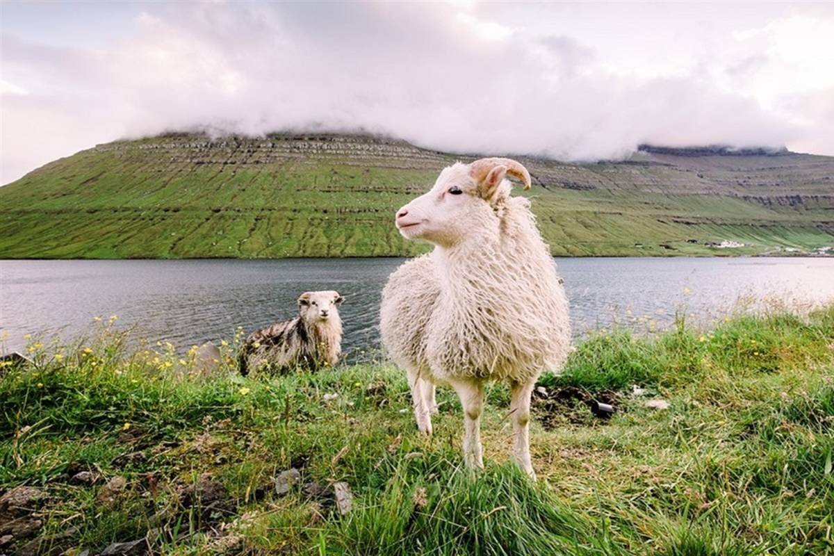 National Geographic Endurance: Coastal Wonders of Norway, the Faroe Islands & Iceland