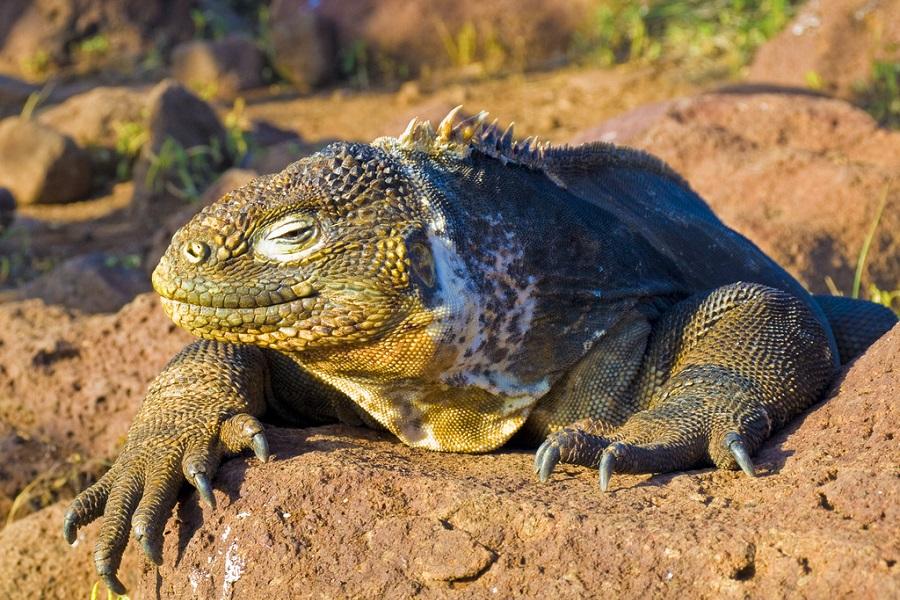 M/C Alya: West Galapagos Islands