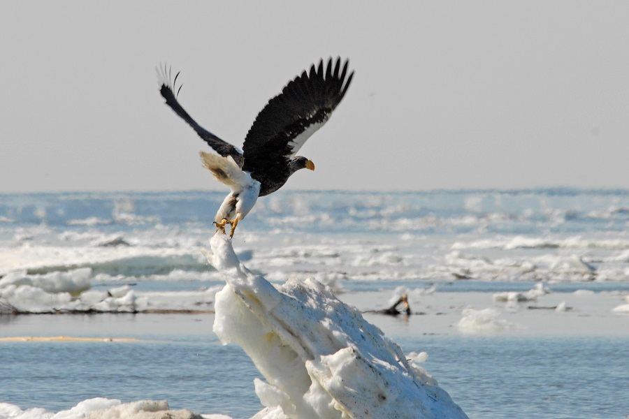 Spirit of Enderby: Sea of Okhotsk - Seals, Seabirds and a Legacy of Sorrow