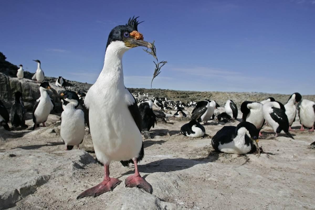 Falklands & Antarctic Peninsula 21/22