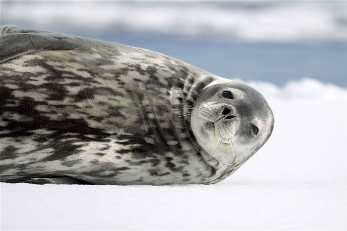 Le Soleal: Emblematic Antarctica ex. Ushuaia
