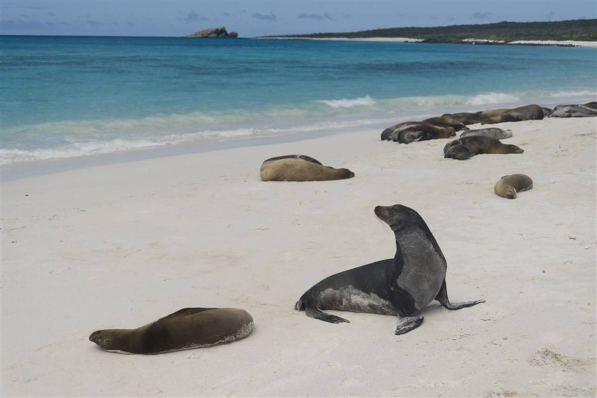 Southern, Eastern & Central Galapagos Islands