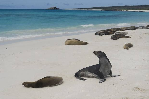Archipell I: Southern, Eastern & Central Galapagos Islands
