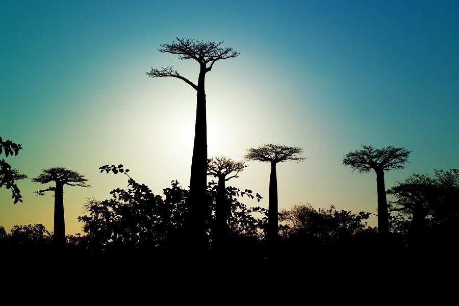 Wonders of Madagascar