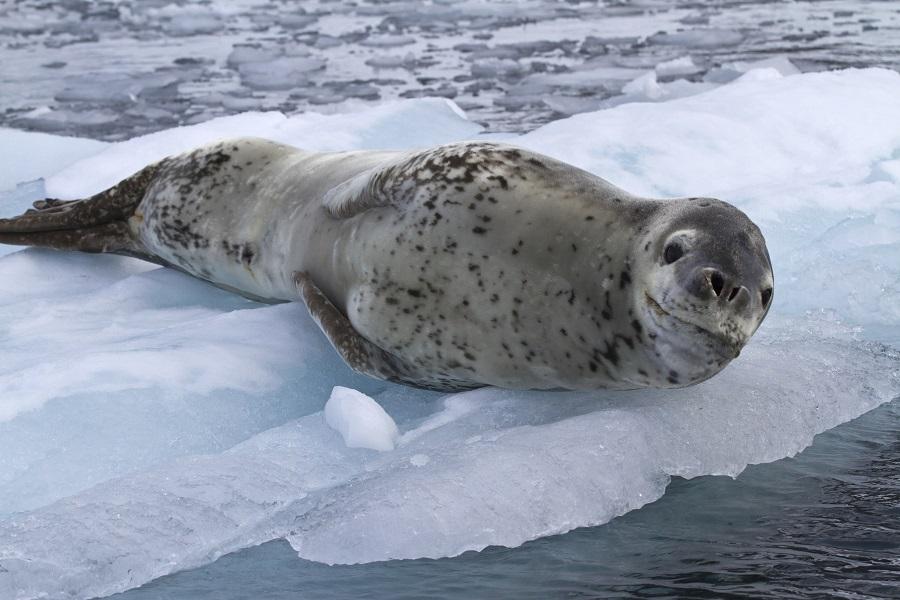 RCGS Resolute: Antarctic Peninsula Adventure