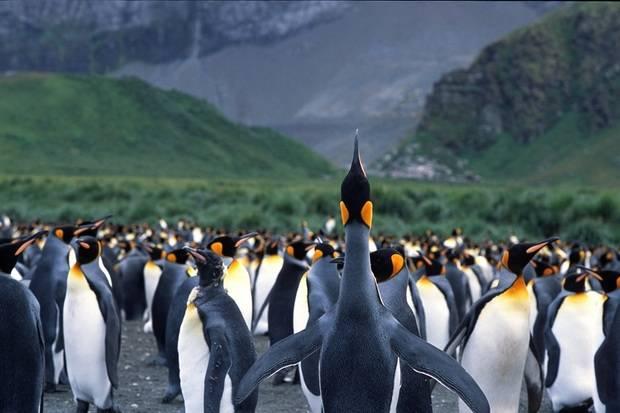 Magellan Explorer: The Falklands & South Georgia
