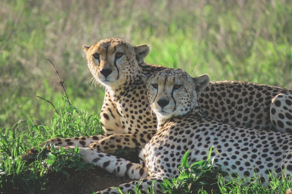 7 Day Luxury Tanzania Safari