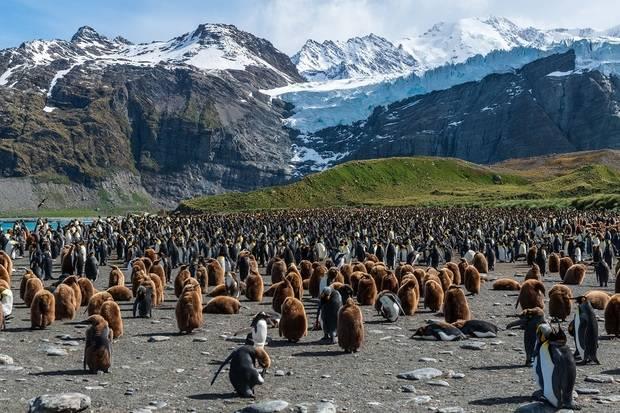 RCGS Resolute: Falkland Islands, South Georgia & Antarctica (Photography Symposium)