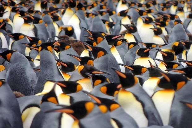 Ocean Nova: Expedition Antarctica - The Great Penguin Adventure