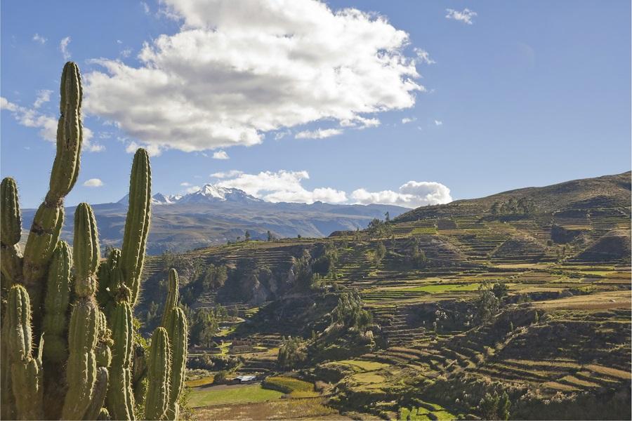 Comprehensive Peru
