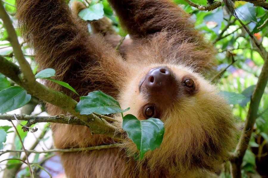 Highlights of Costa Rica & Panama