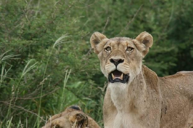 Kruger & Victoria Falls