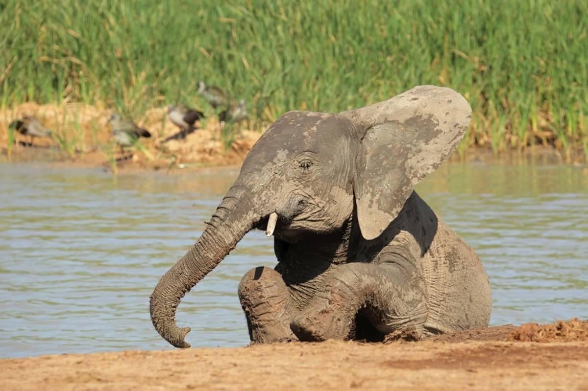 Namibia, Okavango Delta & Victoria Falls