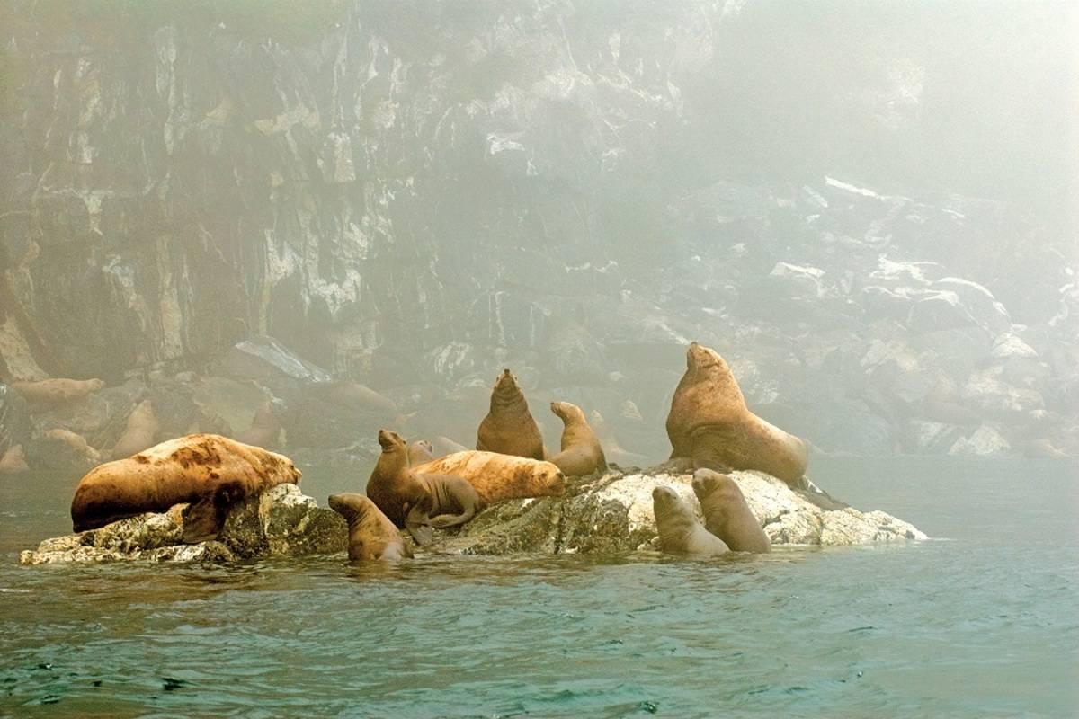 Exploring Alaska's Coastal Wilderness: Juneau to Sitka
