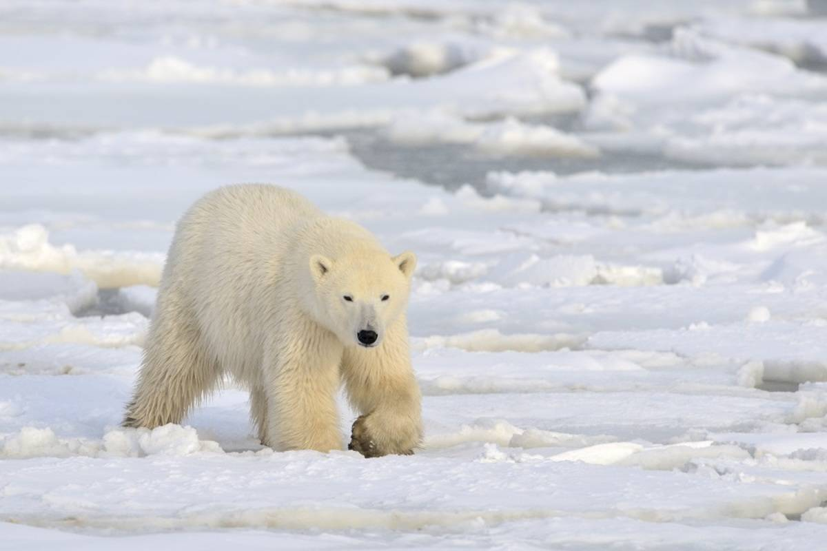 Svalbard Explorer ex Tromso