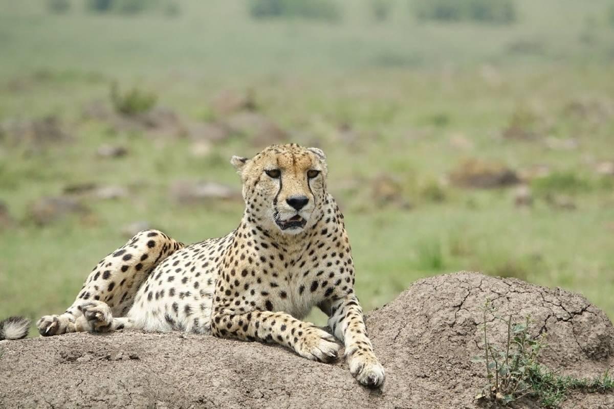 Best of Kenya & Tanzania