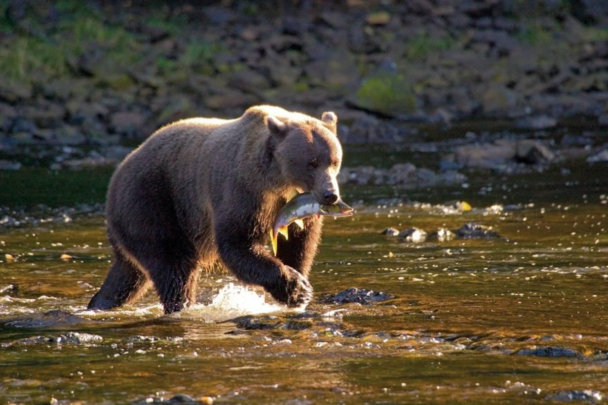 A Remarkable Journey to Alaska, British Columbia & Haida Gwaii