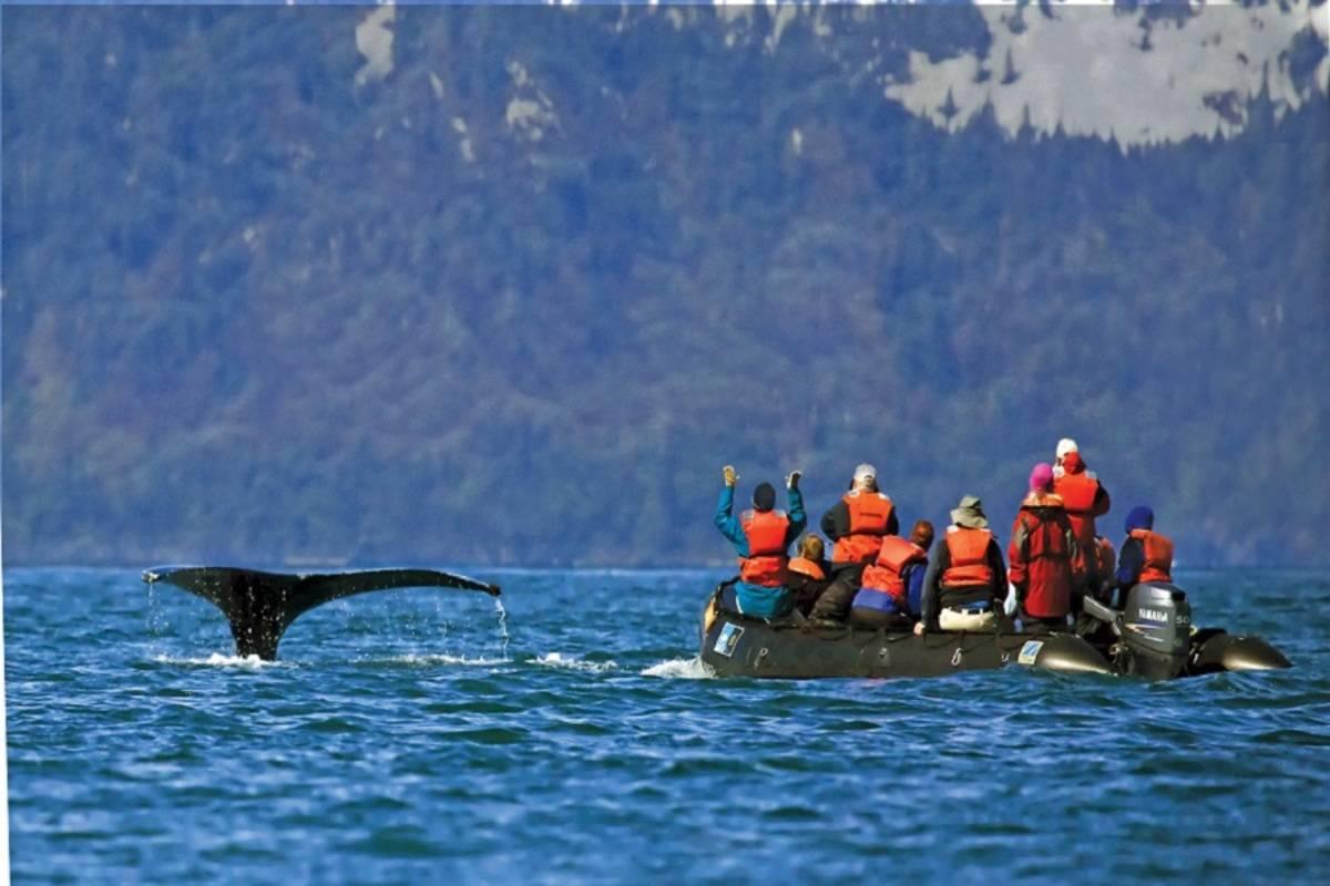Exploring Alaska's Coastal Wilderness: Sitka to Juneau