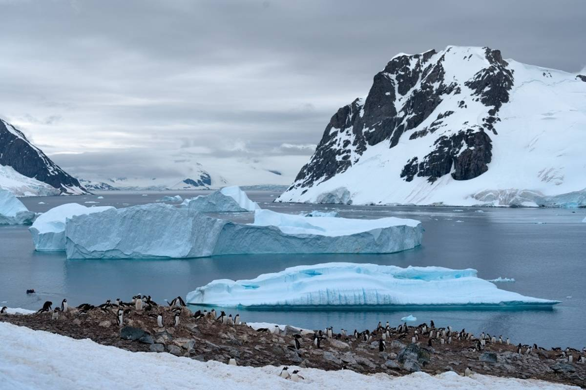 Greg Mortimer: South Georgia & Antarctic Odyssey
