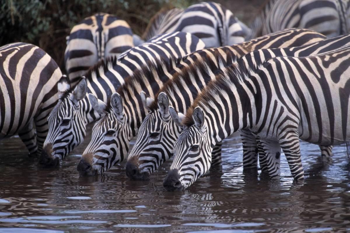Highlights of Kenya & Tanzania